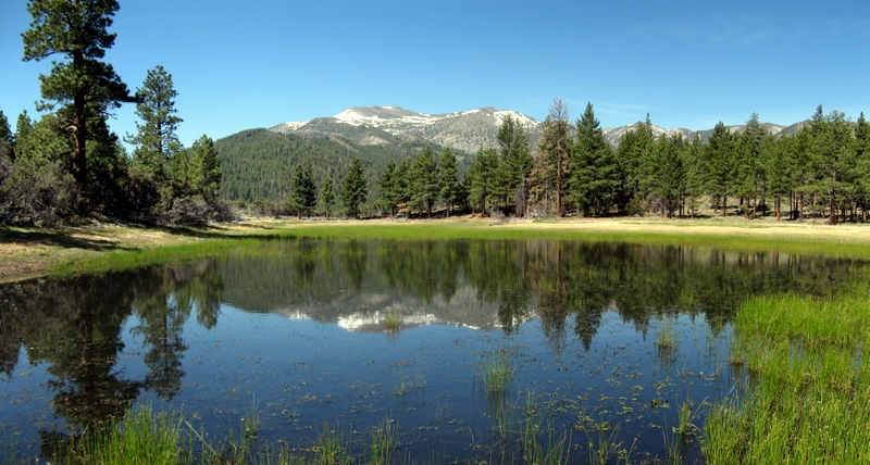 Mt. Rose from Dry Pond